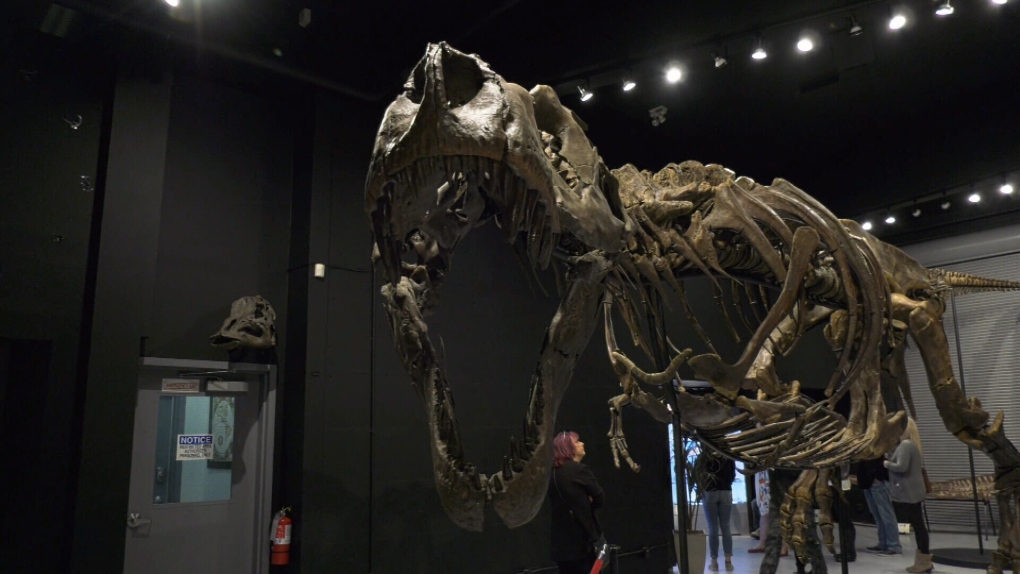 Victoria dinosaur museum offers special hands-on experience