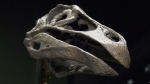 Victoria dinosaur museum lets guests touch fossils