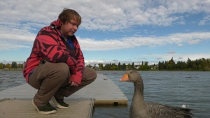 Brad Young, Gon the goose