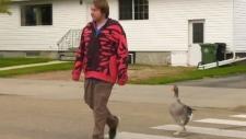 Goose guy