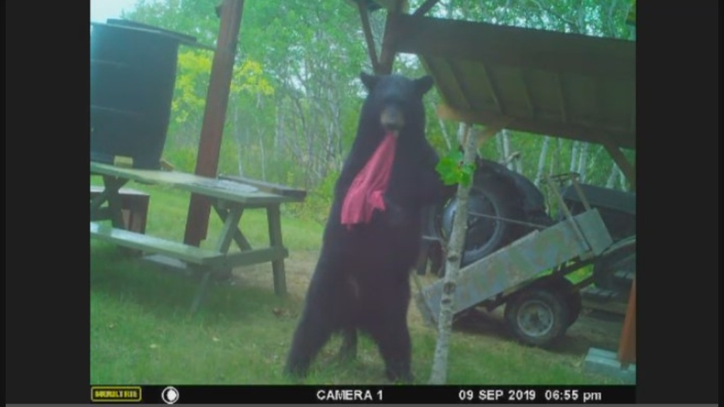Bear breaks into jig in attempt to relieve pesky itch