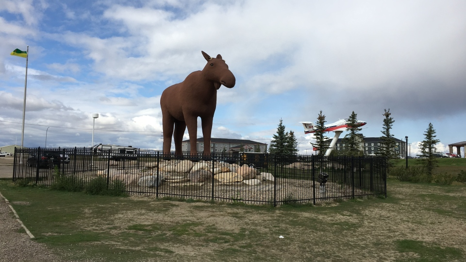 Mac the Moose will get new antlers next month (Taylor Rattray / CTV News Regina)