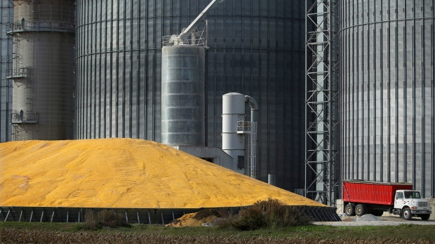 A delayed grain crop is a major concern for Quebec producers who are hoping the government can help. THE CANADIAN PRESS/AP -Seth Perlman