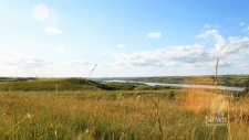 Push is on to protect grasslands