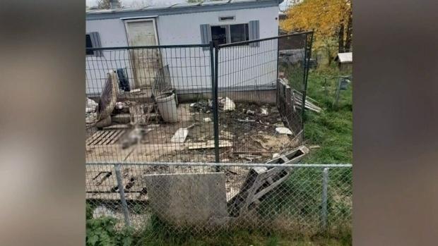 SPCA investigating photos of dead dog in Alta. yar