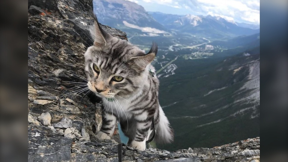 Bodhi's owner runs an Instagram page showing him hiking, looking majestic before a picturesque mountain backdrop, paddleboarding and even going for a swim. He's basically a cat of all seasons. (bodhi_theadventurecat/instagram)