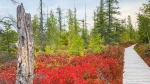 Autumn reds coming through nicely at Mer Bleu Bog. (Victoria Perry/CTV Viewer)