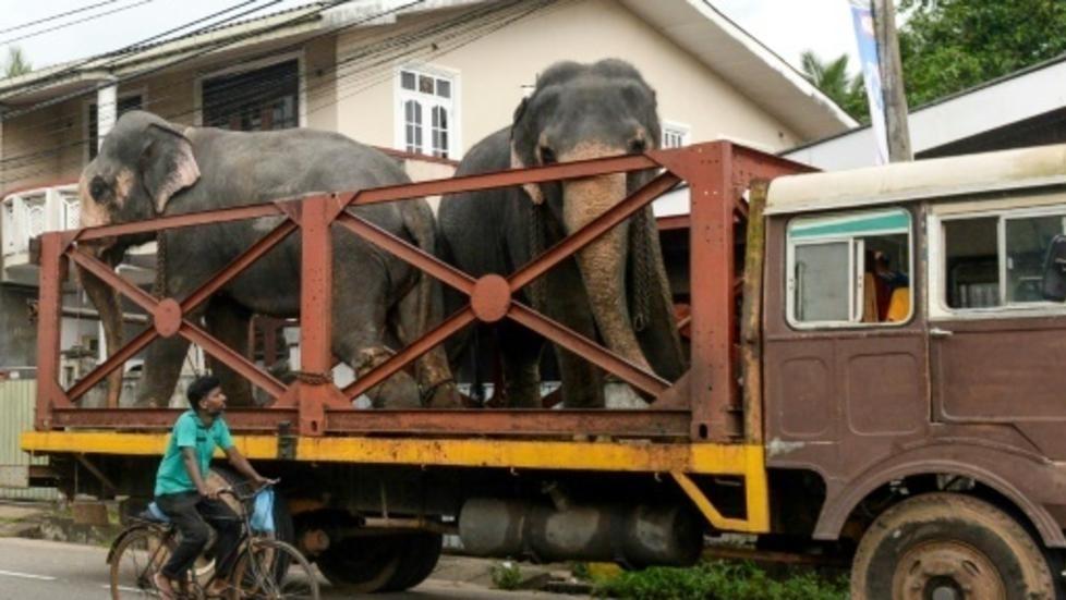 Tougher penalties to protect Sri Lanka elephants after mass deaths