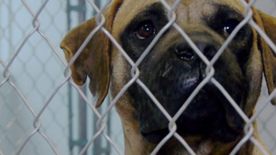 Dozens of dogs were rescued from a South Korean dog meat farm.