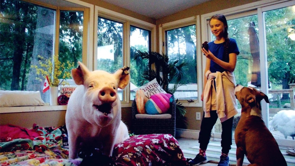 Greta Thunberg eats a cupcake during her visit with Esther the Wonder Pig. (@estherthewonderpig / Facebook)