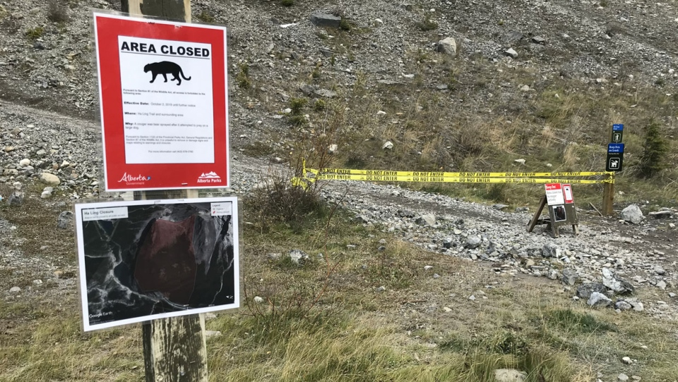 A small dog was killed in a cougar attack this week, prompting officials to shut down Ha Ling Peak trail and East End of Rundle trail.