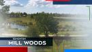 Edmonton Mill Woods