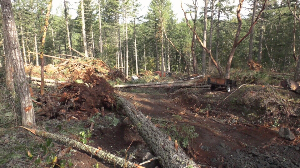 Drew Henson lives beside the lot that is being cleared and shot video of his new neighbour pushing trees over with his excavator, often past the dinner hour. (CTV Vancouver Island)