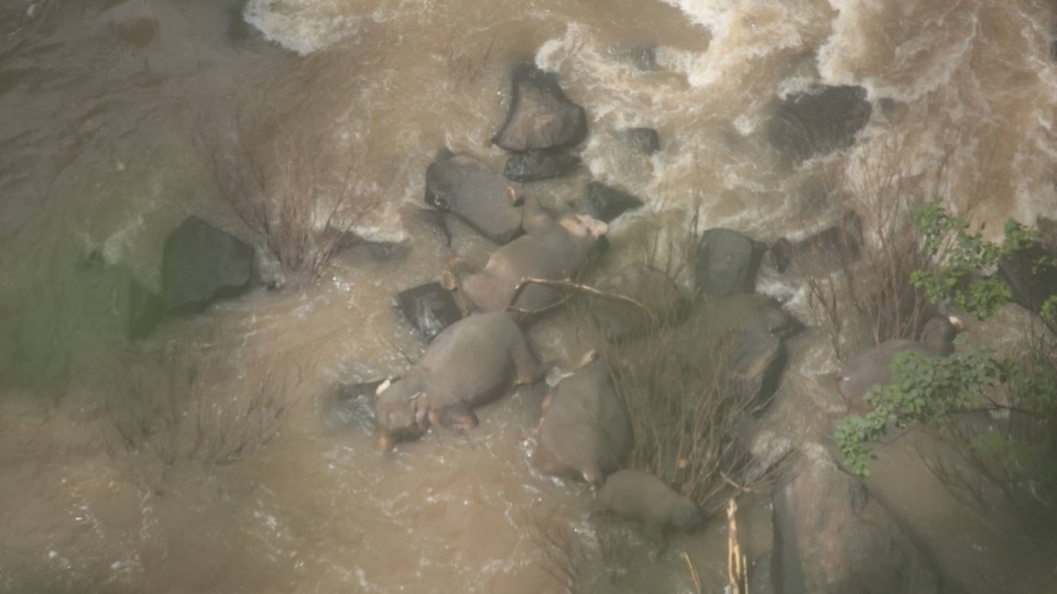Officials said six wild elephants drowned and died at the Haew Narok waterfall in Khao Yai National Park on Saturday morning. (Department of National Parks, Wildlife and Plant Conservation)