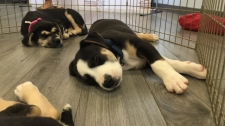 Three puppies ready for adoption