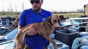Dog dug from storm rubble, barks another day
