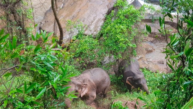 More elephants found dead at Thai waterfall