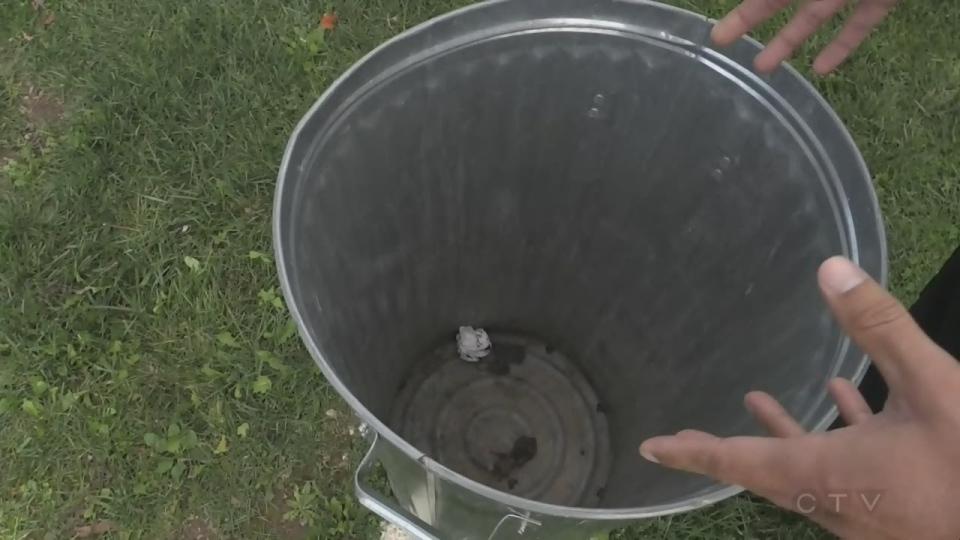 newborn kittens trash can
