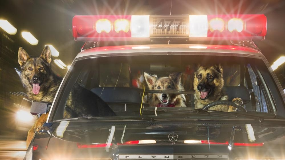 Canines in a police car