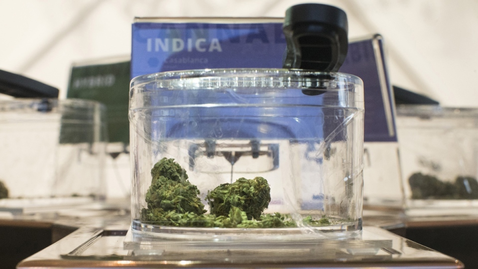 Cannabis is shown in a display jar on the first morning of opening for a Toronto retail store licensed to sell cannabis in Ontario, on April 1, 2019. (Chris Young / THE CANADIAN PRESS)