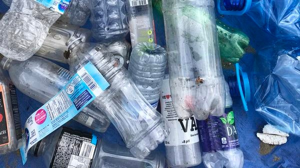 Plastic bottles collected during the cleanup and brand audit at Kits Beach in Vancouver, B.C. (Greenpeace)