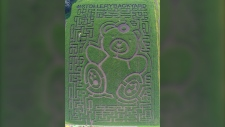 An aerial view of this year's Edmonton Corn Maze, featuring a Stollery Hospital design, is shown. (EdmontonCornMaze.ca)