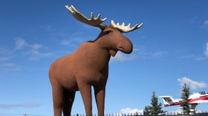 Mac the Moose