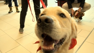 A new therapy dog program has rolled out at the Ottawa International Airport in an effort to comfort travellers.