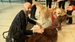 Therapy dogs report for duty at airport