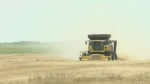 Slow harvest causing stress