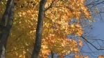 Fall Rhapsody, part 1