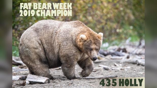 Holly the fat bear