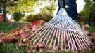 Fall leaves being raked in this stock image. (Shutterstock)