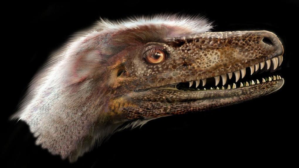 calgary, edmonton, dinosaur, dinosaur provincial p