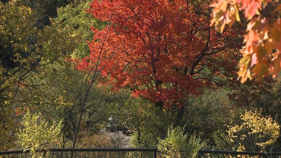 Trees at Hog's Back Park.