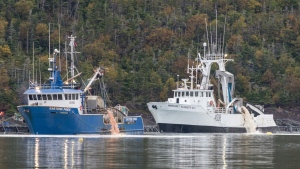 Pink residue is disposed into Fortune Bay in southern Newfoundland on Oct. 2 as part of a cleanup following salmon deaths at a fish farm last month. The company said Friday that it estimates 2.6 million salmon, just under half the fish in its pens, have died. (THE CANADIAN PRESS/HO-Atlantic Salmon Federation)