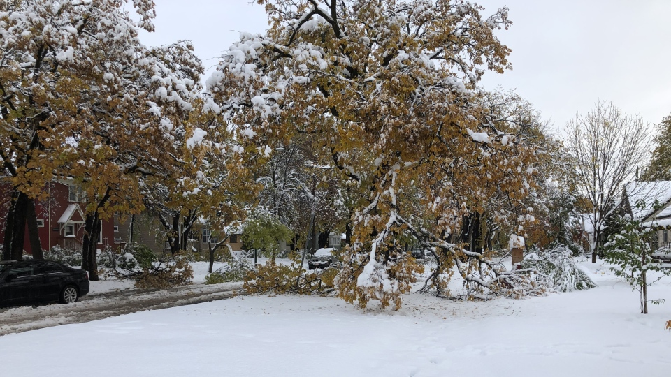 Riverview neighbourhood in Winnipeg during the storm. (Photo: Karen Mitchell/CTV News Winnipeg)