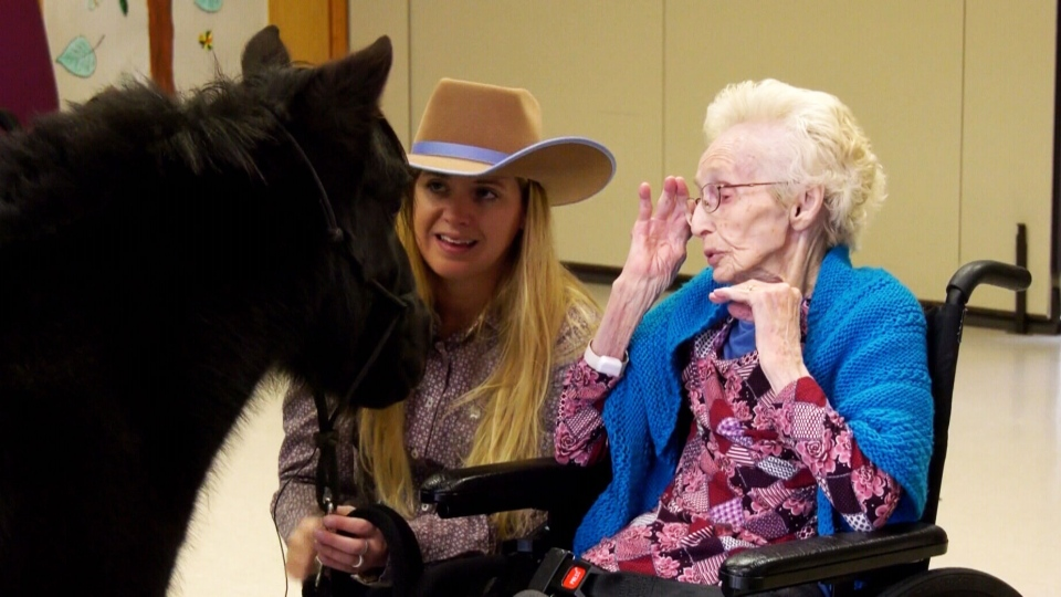 Diablo the miniature horse entertains Marlys Bingham, a resident at Willow Creek Continuing Care Centre, while his owner watches on. (CTV Calgary)