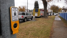 Police were called to a pedestrian collision near 118 Avenue and 66 Street sometime before 2 p.m. Oct. 13.