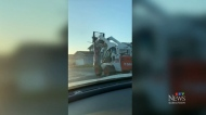 Video of fork-lift carrying dead animal goes viral