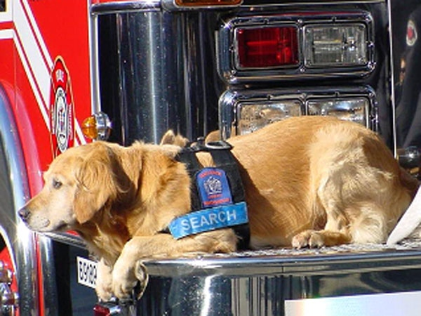 Vancouver's fire department is mourning the loss of Barkley, a search and rescue dog who had served with the department 11 years. Sept. 2, 2009.
