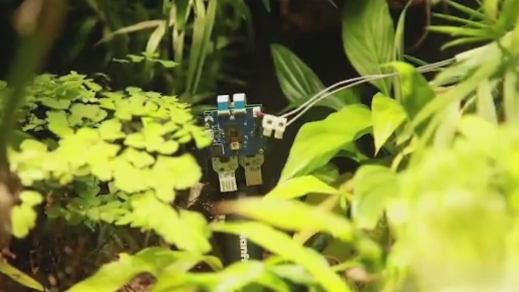 Plant takes 'selfies,' showing possibility of plant-powered devices