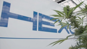 The Hexo Corp. logo on the wall of the Gatineau-based company is partially obscured by cannabis plant leaves in this undated photo. (CTV Ottawa)