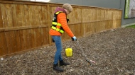 A clean needles program is working in Calgary