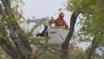 Nova Scotia Power crews to restore power after a tree fell on a line in Dartmouth on Oct. 17, 2019.