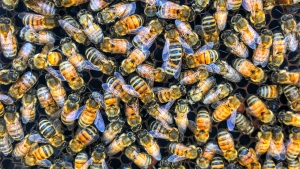 Argentina-based startup Beeflow has developed a special nutrient-packed formula for bees meant to boost their immune systems and make them stronger to work better in colder temperatures. (Bryce Urbany/CNN)