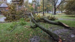 Downed branches are seen in Saint John's King's Square on Oct. 17, 2019.
