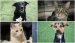 Thrasher, Jasper, Bree and Hazel are all up for adoption through Calgary Animal Services' half-price adoption event. (City of Calgary)