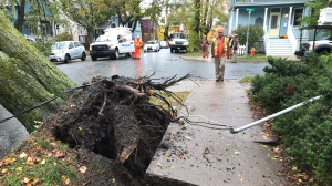 Crews assess the damage from an uprooted tree on Harvard Street in Halifax on Oct. 17, 2019.