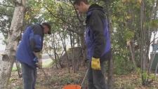 Harm reduction workers in Sudbury pick up needles regularly. Alana Everson/CTV Northern Ontario